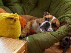 Come riconoscere la colite nel cane e come intervenire per curarla