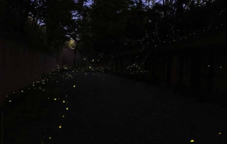 Insetti luminosi (Foto Facebook)