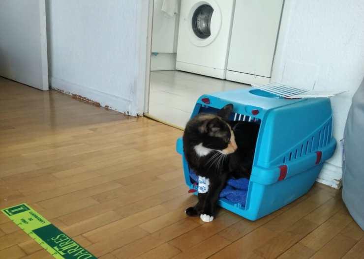 Il gattino sofferente (Foto Facebook)