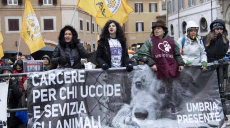 partito animalista roma cavalli carrozzer