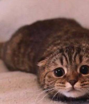 gatto tombino
