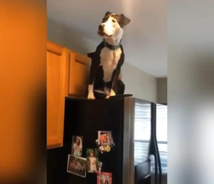 Mako il cane che pena di essere un gatto