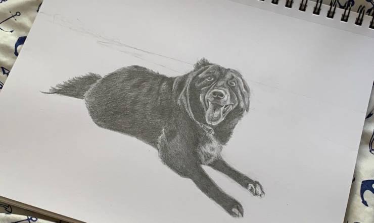 Disegno di un cane (foto Facebook)