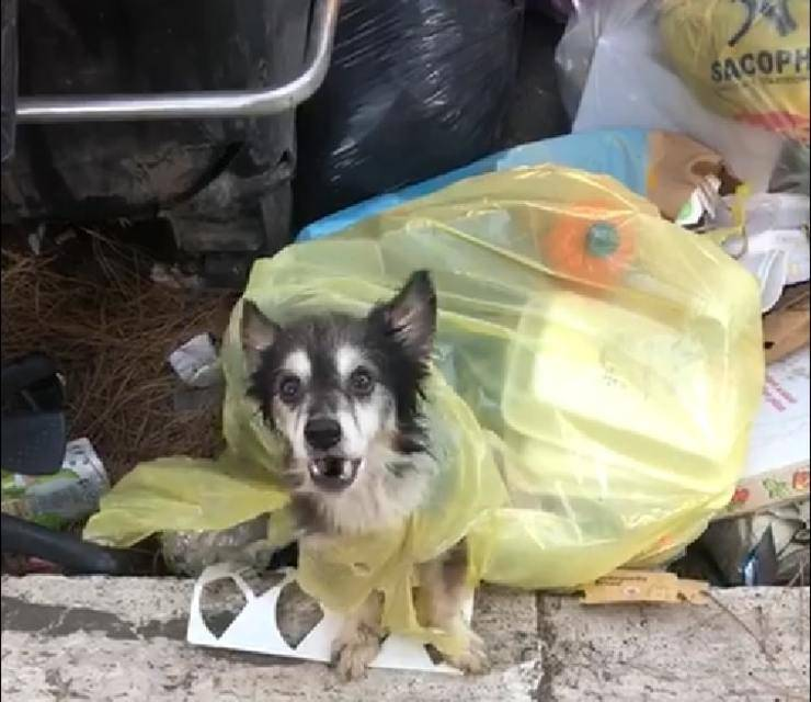 Cane gettato tra i rifiuti