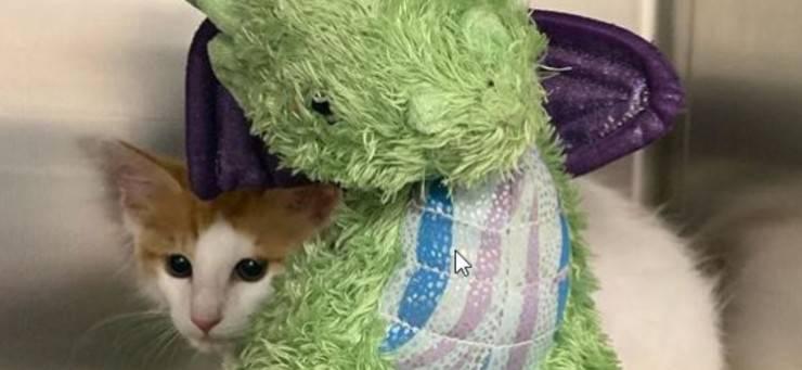 gatto drago