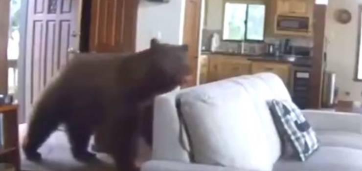 orso casa video