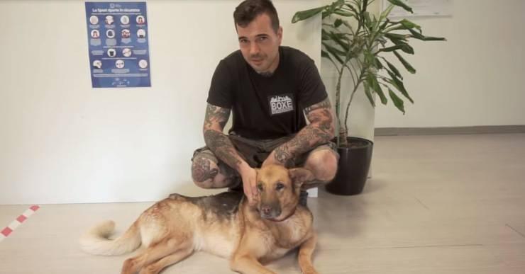campioni ring abbandono cani video