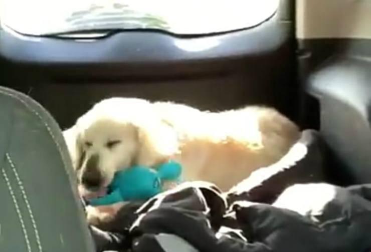Il cane e il suo giocattolo (Foto Facebook)