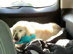 Il cane che gioca con il peluche (Foto Facebook)