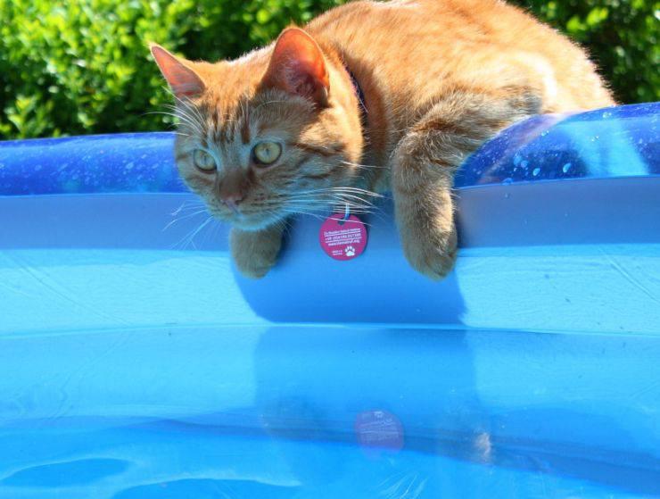Gatto in piscina: come passare un'estate in tutta sicurezza con il micio