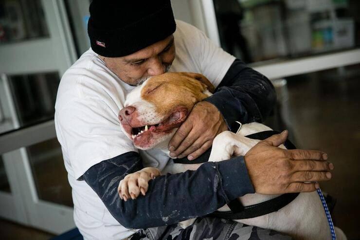 Uomo lascia il suo adorato pitbull in un rifugio