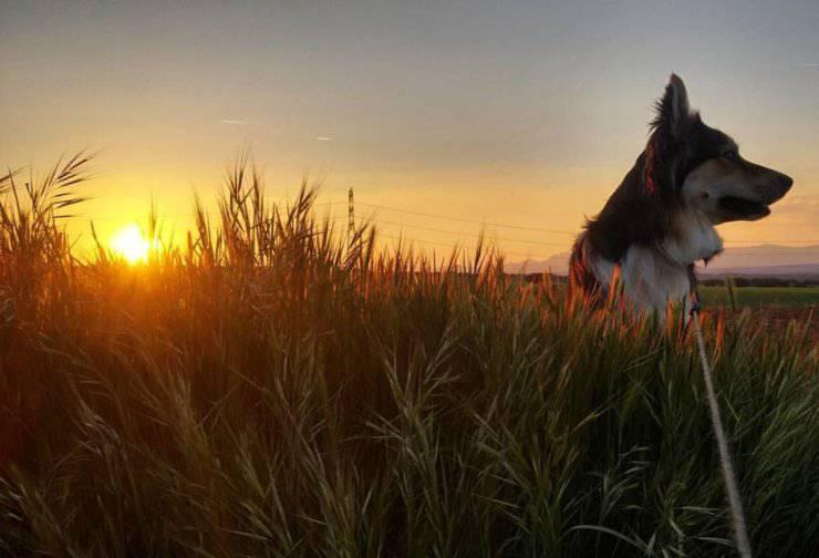 Come fa il cane a ritrovare la strada di casa