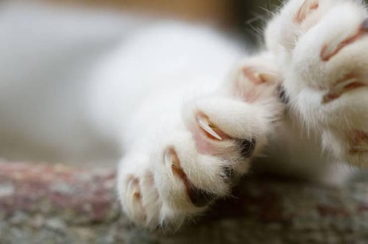 Come curare la salute delle unghie del nostro gatto in estate