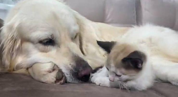 Il cane e il micio vicini (Foto video)