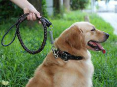 Scegliere il guinzaglio giusto per il cane