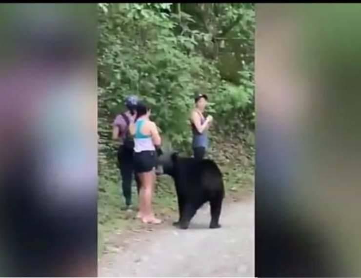 La turista e l'orso ravvicinato (Foto video)