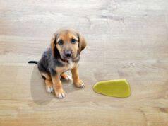 insegnare al cane a non fare i bisogni in posti non voluti