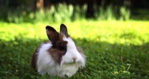 Le punture di insetti estivi nel coniglio