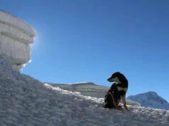 La cagnolina sulla neve (Foto Facebook)