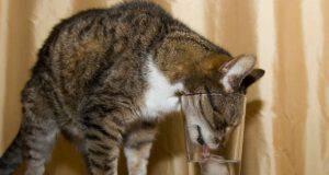 Cubetti di ghiaccio per il gatto: un modo per rinfrescarlo dal caldo in estate