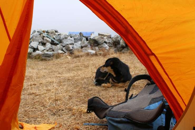 La cagnolina fuori la tenda (Foto Facebook)