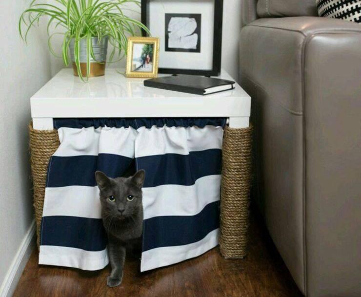 Migliori lettiere per gatti in appartamento