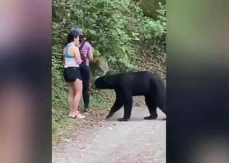 L'orso alla ricerca di cibo (Foto video)