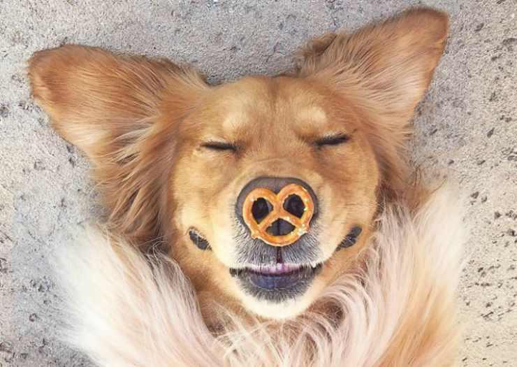 Il cane in posa (foto Instagram)