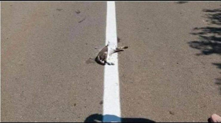 Gatto verniciato in strada