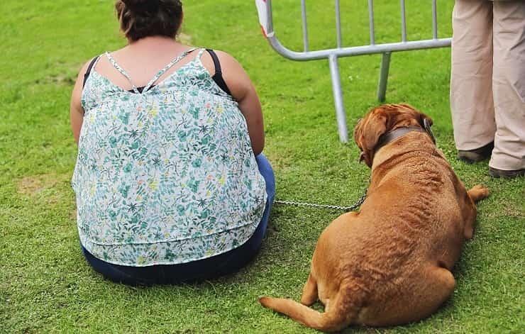 Padrone obeso cane obeso