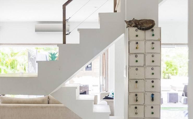 gatto ama dormire in alto