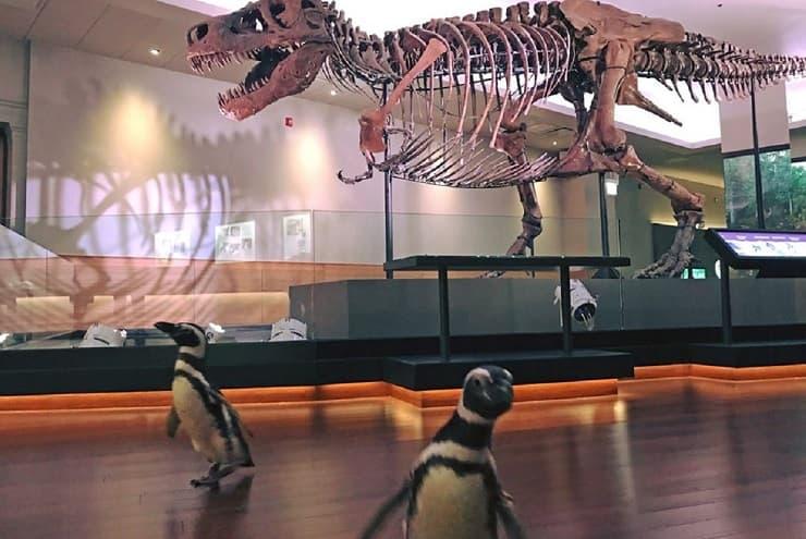Pinguini in visita al museo
