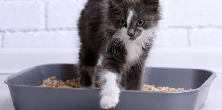 ridurre la puzza e lo sporco della lettiera per gatti