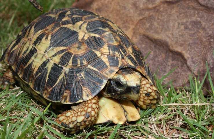 In vacanza con la tartaruga: come comportarci d'estate