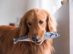 Il cane può mangiare il tonno?