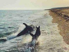 Cane e delfino in corsa (Foto Instagram)