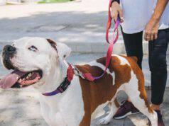 Come abituare il cane al guinzaglio: addestrare Fido correttamente