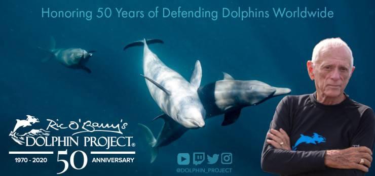 dolphin project delfini progetto bali