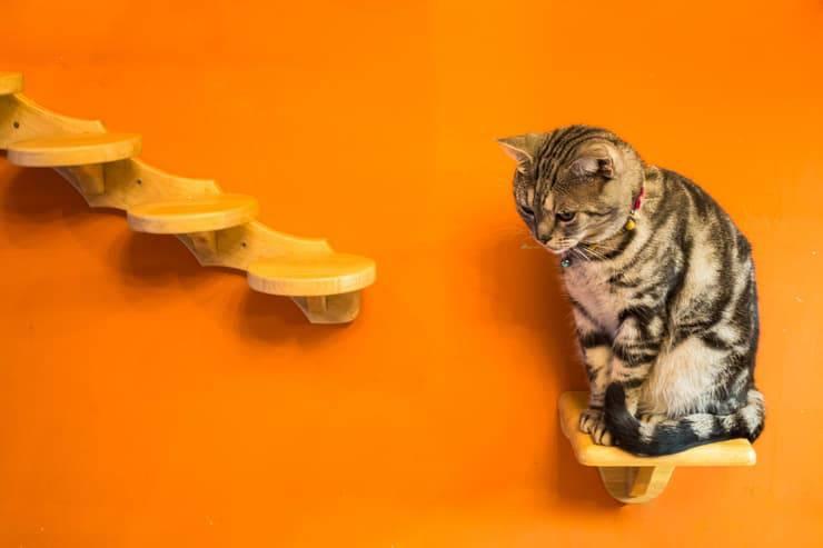 Mensole per il gatto (Foto Adobe Stock)