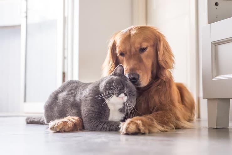 Gli animali sono esseri senzienti (Foto Adobe Stock)