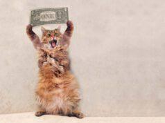 Gatti più costosi al mondo