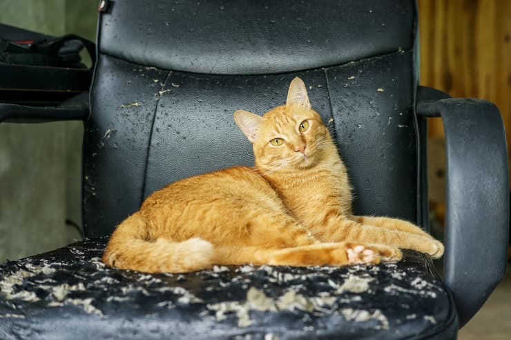 Come far perdere al gatto le cattivi abitudini (Foto Adobe Stock)