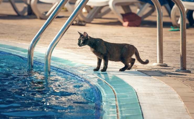 Gatto a bordo piscina