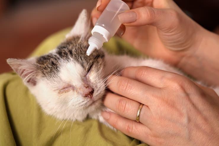 Come mettere il collirio al gatto (Foto Adobe Stock)