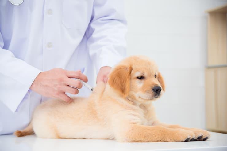 Come fare l'iniezione al cane? (Foto Adobe Stock)