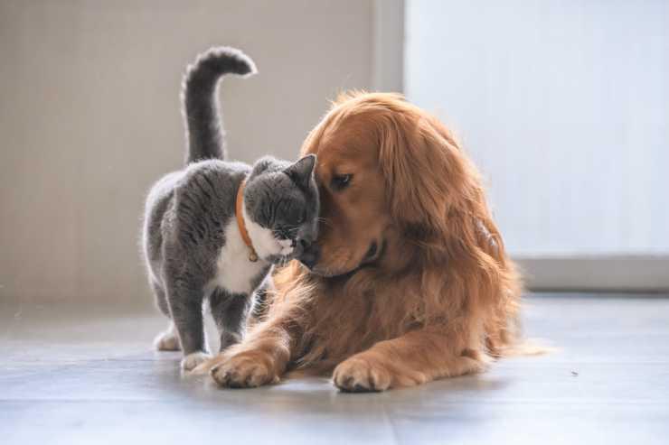 Un cane e un micio amici