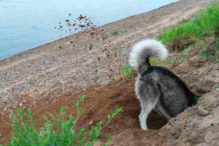Il cane che scava (Foto Adobestock)