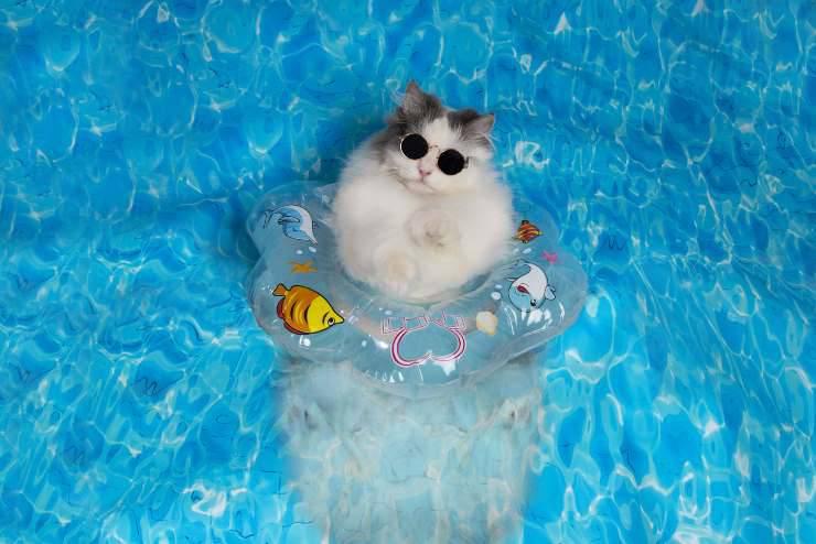 Micio in piscina
