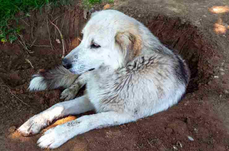 Il cane nella buca del terreno (Foto Adobestock)