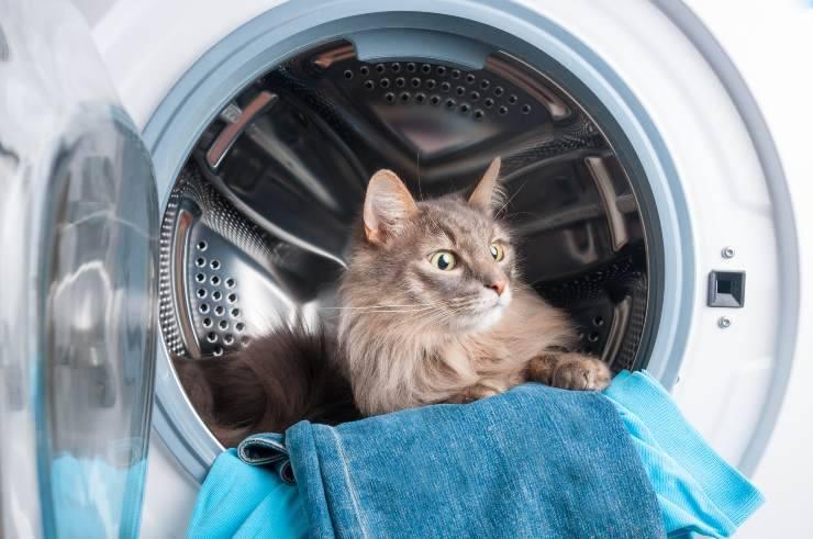 Micio in lavatrice